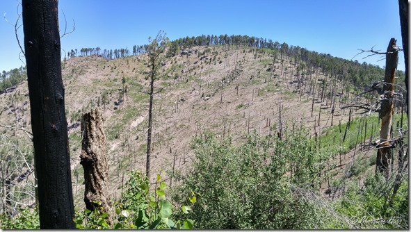 A once-forested slope along the crest trail. After two large wildfires in 20 years, it will take a long, long time for the forest to return.